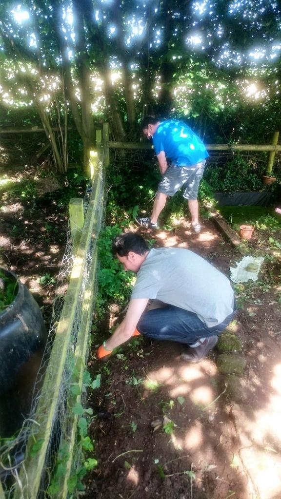 Veg box weeding